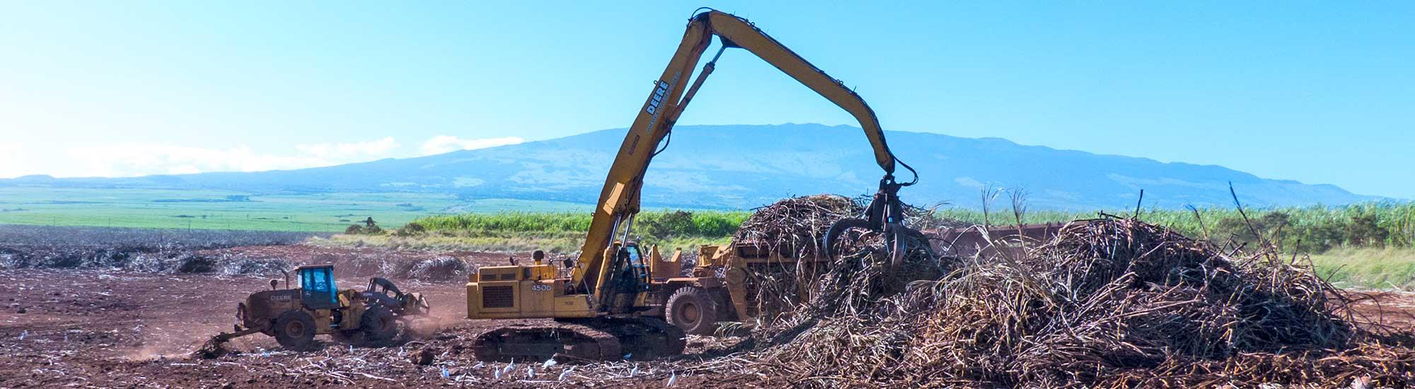 Hawaii Agriculture – Hawaii Agriculture News
